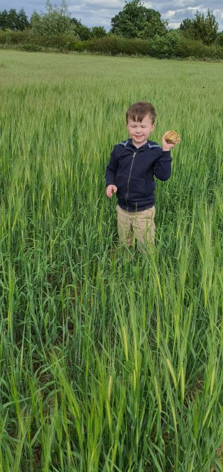 Ethan Rock Walking In The Fields June 2020