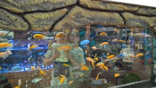 Garden Center July 2016 Ethan And I Through Fish Tank