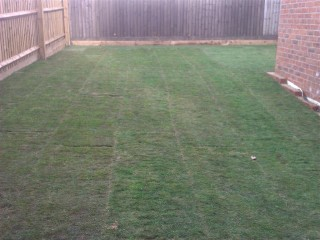 Townhouse Grass Fitted