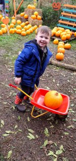 Ethan Wheel Barrow Pumpkin Picking West Lodge Farm Park Oct 2020